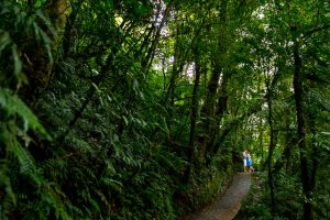 Creative and adventurous engagement photos in the Monteverde cloud forest, Costa Rica.